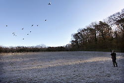 Game shooting South West England, Ducks flighting