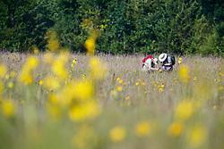 Sunflowers and researches working on Blackland Prairie, Mary Talbot Prairie, owned by Native Prairies Association fo Texas (NPAT), Texarkana, Texas, Farmersville, Texas, USA. Need identification