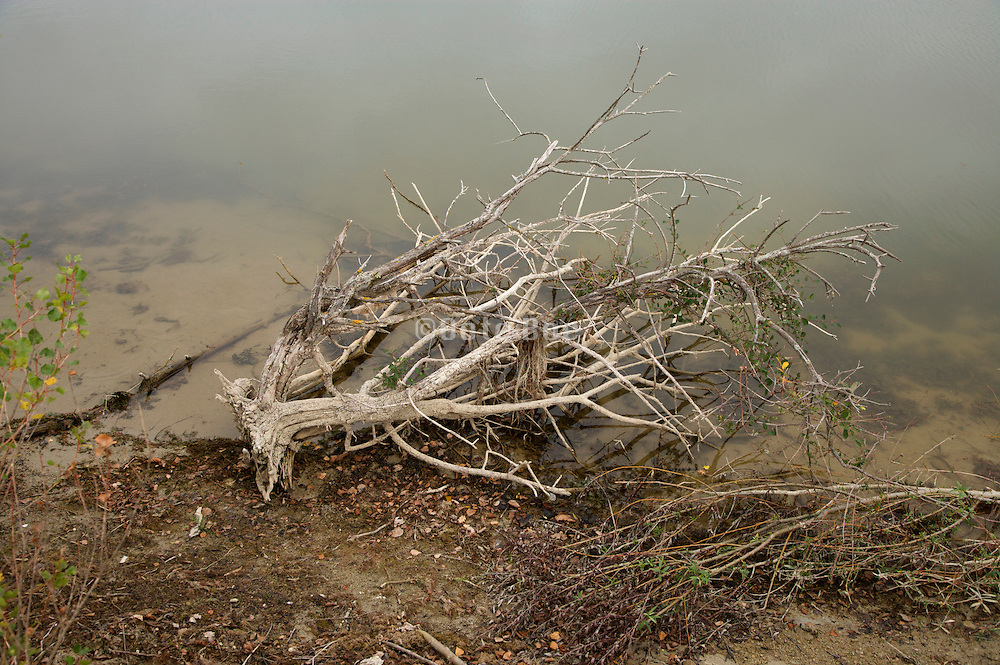 a dead tree bush piece of wood at the edge of water