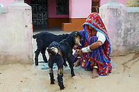 Inde, Rajasthan, village de Meda dans les environs de Jodhpur, population Rabari, bergere // India, Rajasthan, Meda village around Jodhpur, Rabari ethnic group