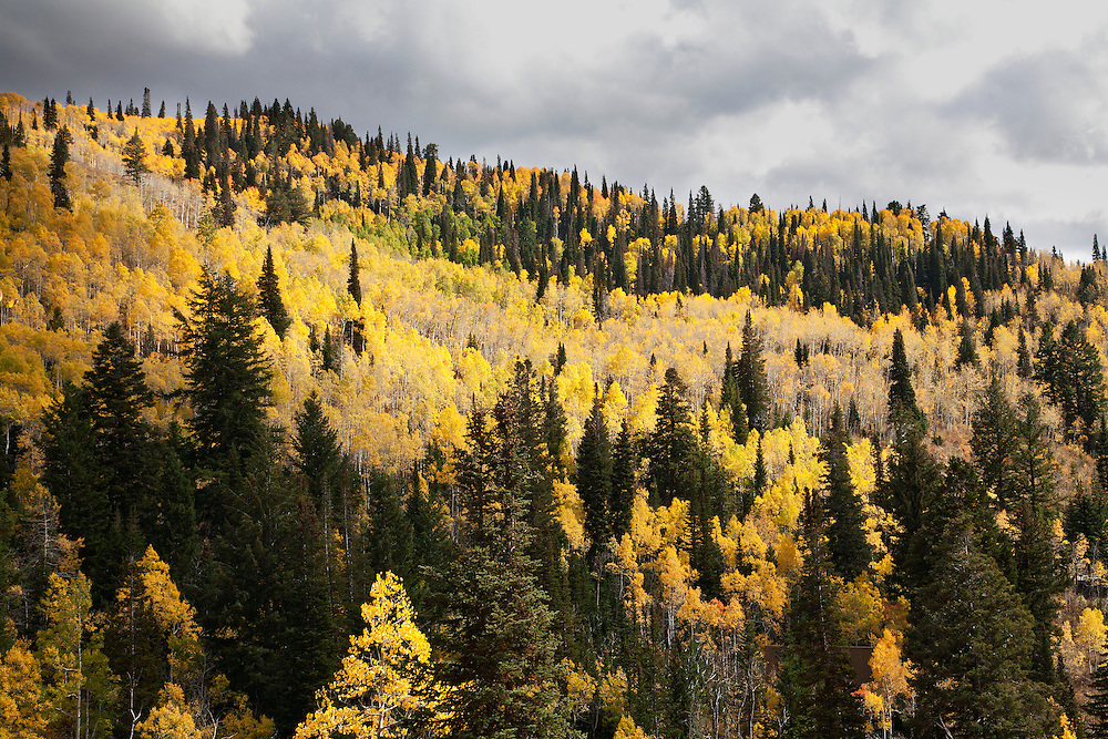 Wasatch Mountains, Utah