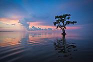 Wetlands in Southern Louisiana