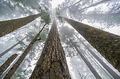 Lowland Forests_Excluding Temperate Forests