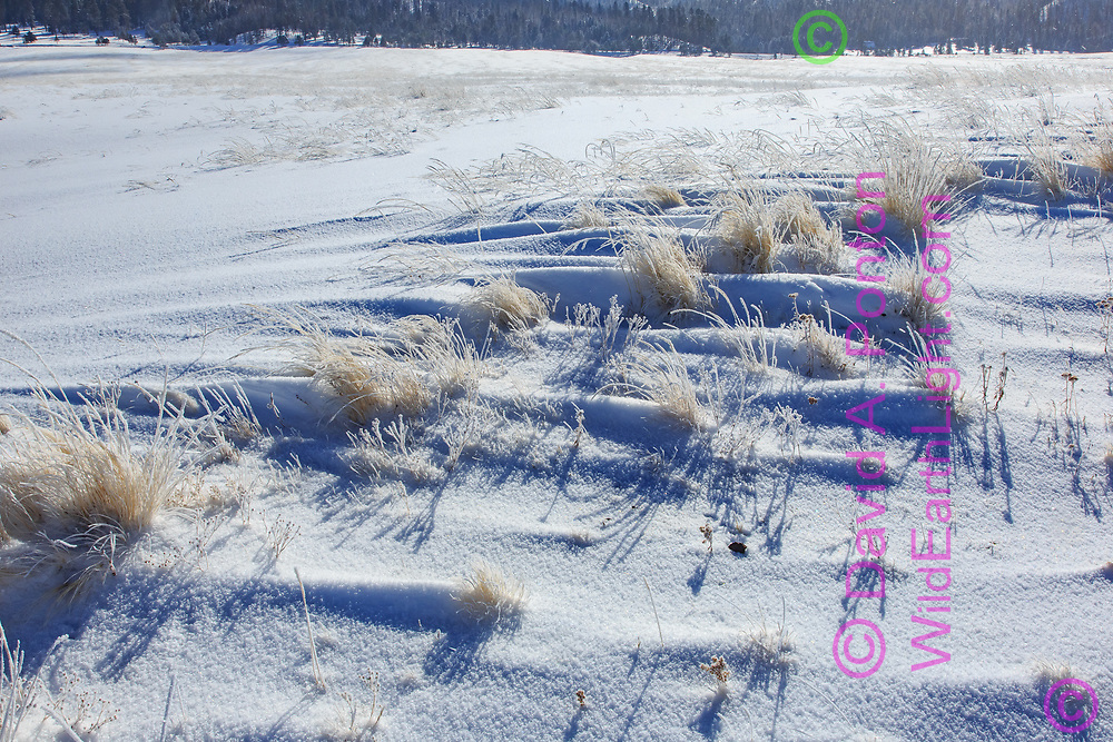 New snow in the Valle Grande, with small snow drifts formed downwind of each clump of grass, Valles Caldera National Preserve, © David A. Ponton
