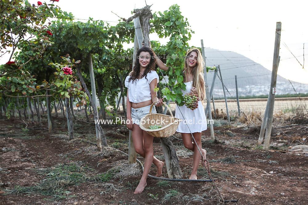 Young Teen girl in white dress picks grape in a vineyard