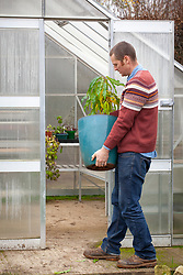 Bringing a container grown tender fruit tree into the greenhouse to overwinter