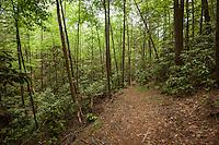 Rough Ridge Trail in the Cohutta Wilderness, Chattahoochee National Forest