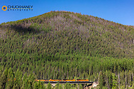 Burlington Northern freight train crossing the Sheep Creek trestle in the Flathead National Forest, Montana, USA
