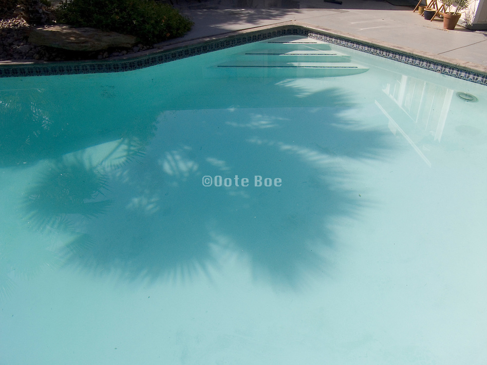 swimming pool with reflection of a palm tree.