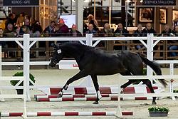 065, Racoon<br /> BWP Hengstenkeuring -  Lier 2020<br /> © Hippo Foto - Dirk Caremans<br />  17/01/2020