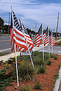American flags displayed along a rural road.