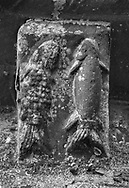 The Stone Bestiary - Black and white photo art print of Norman Romanesque exterior corbel no 70 - sculpture of two fish swimming upwards. A fish was used by early Christians to symbolise Jesus Christ . The Norman Romanesque Church of St Mary and St David, Kilpeck Herefordshire, England. Built around 1140 .<br /> <br /> Visit our LANDSCAPE PHOTO ART PRINT COLLECTIONS for more wall art photos to browse https://funkystock.photoshelter.com/gallery-collection/Places-Landscape-Photo-art-Prints-by-Photographer-Paul-Williams/C00001WetsxVxNTo .<br /> <br /> By Photographer Paul E Williams