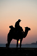 essaouira, morocco, camel on the beach at sunset in sillouette Morocco travel photography