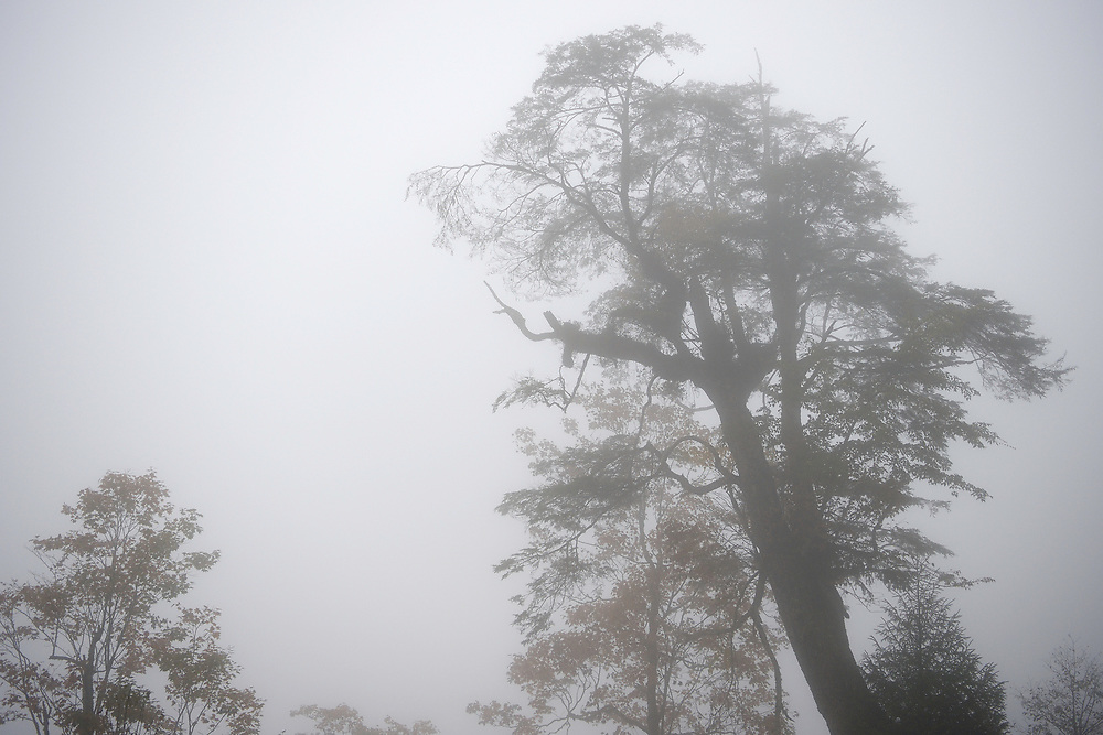 Humid montane mixed forest, Laba He National Nature Reserve, Sichuan, China