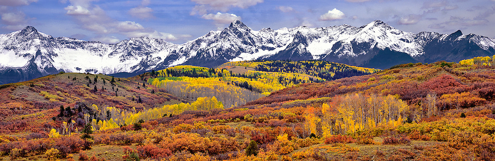 Autumn turns aspen leaves orange and gold at Dallas Divide in the San Juan Mountains in Colorado