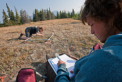 Researchers measuring abundance of plant species in long-term plant removal experiments near Kluane Lake, Yukon