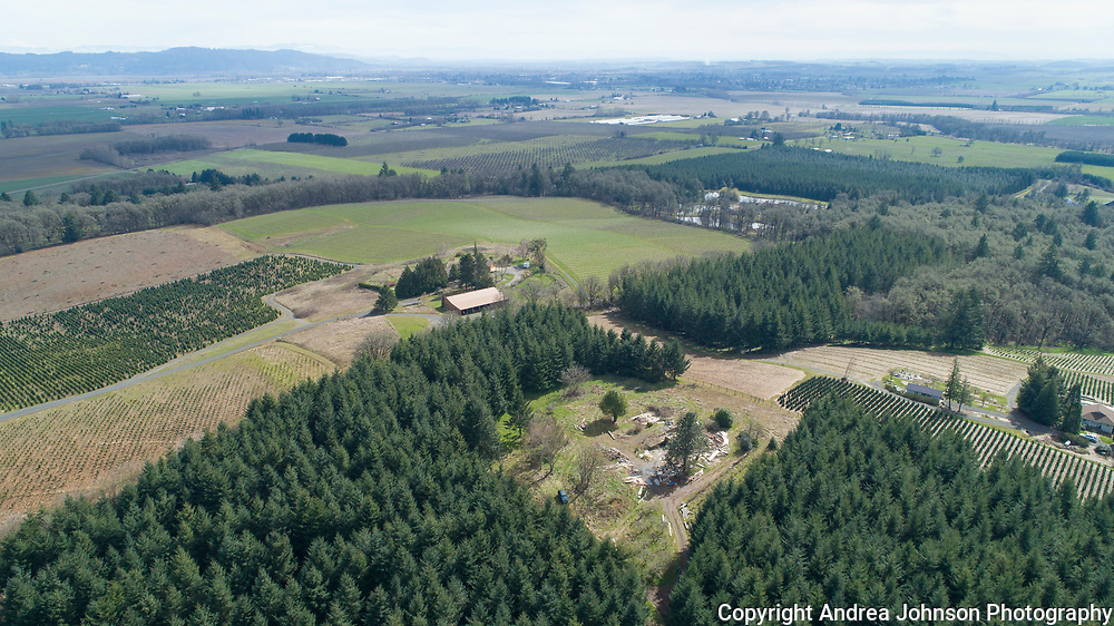 Aerial drone views over Open Claim vineyards,  Willamette Valley, Oregon