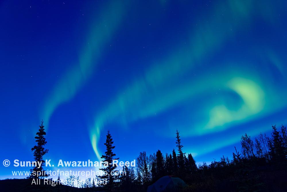 Northern Lights swirling over Wonder Lake Campground in Denali National Park & Preserve, Interior Alaska, Autumn.