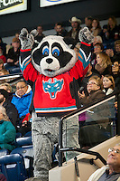 KELOWNA, CANADA - JANUARY 3: Rocky Racoon, the mascot of the Kelowna Rockets cheers in the stands on January 3, 2015 at Prospera Place in Kelowna, British Columbia, Canada.  (Photo by Marissa Baecker/Shoot the Breeze)  *** Local Caption *** Rocky Racoon;