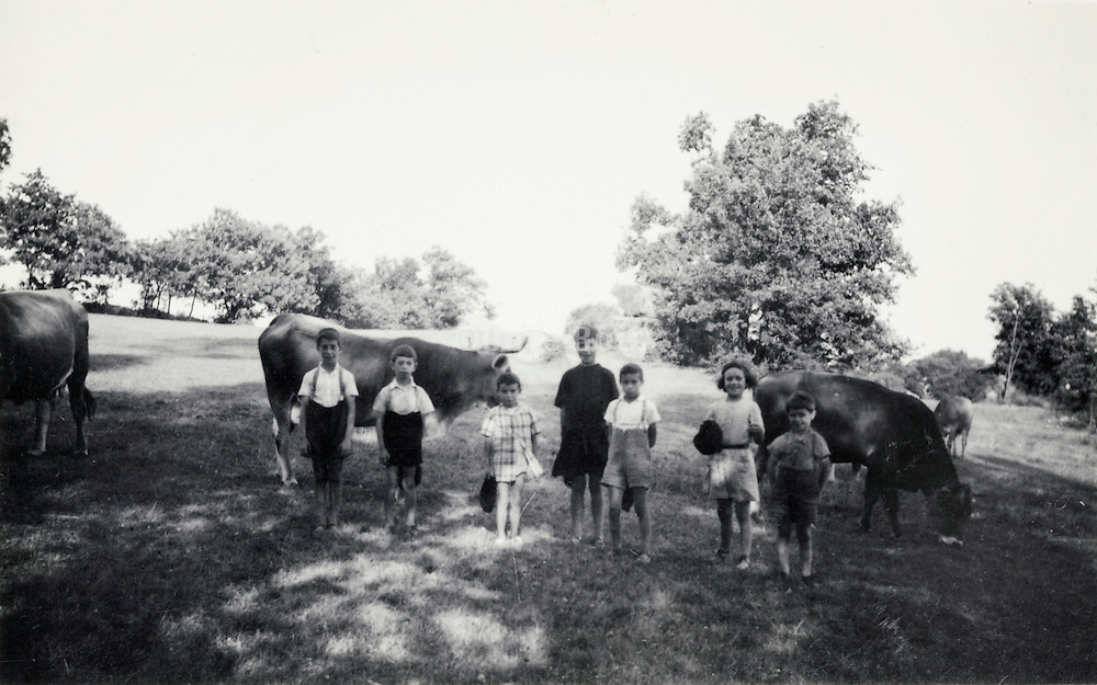 children posing with cows in the field rural France 1937