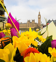 Westminster, London, March 27th 2017. Flowers attached to the ornate lampposts of Westminster bridge make a colourful tribute to those who lost their lives or were injured on the March 22nd terror attack on the bridge and in the grounds of Parliament. Credit: ©Paul Davey<br /> <br /> ©Paul Davey<br /> FOR LICENCING CONTACT: Paul Davey +44 (0) 7966 016 296 paul@pauldaveycreative.co.uk