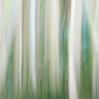 """""""Roots""""<br /> <br /> Sunlight shines strongly on wonderful jungle tree roots in this light and fanciful abstract!!<br /> <br /> Nature Abstracts by Rachel Cohen"""