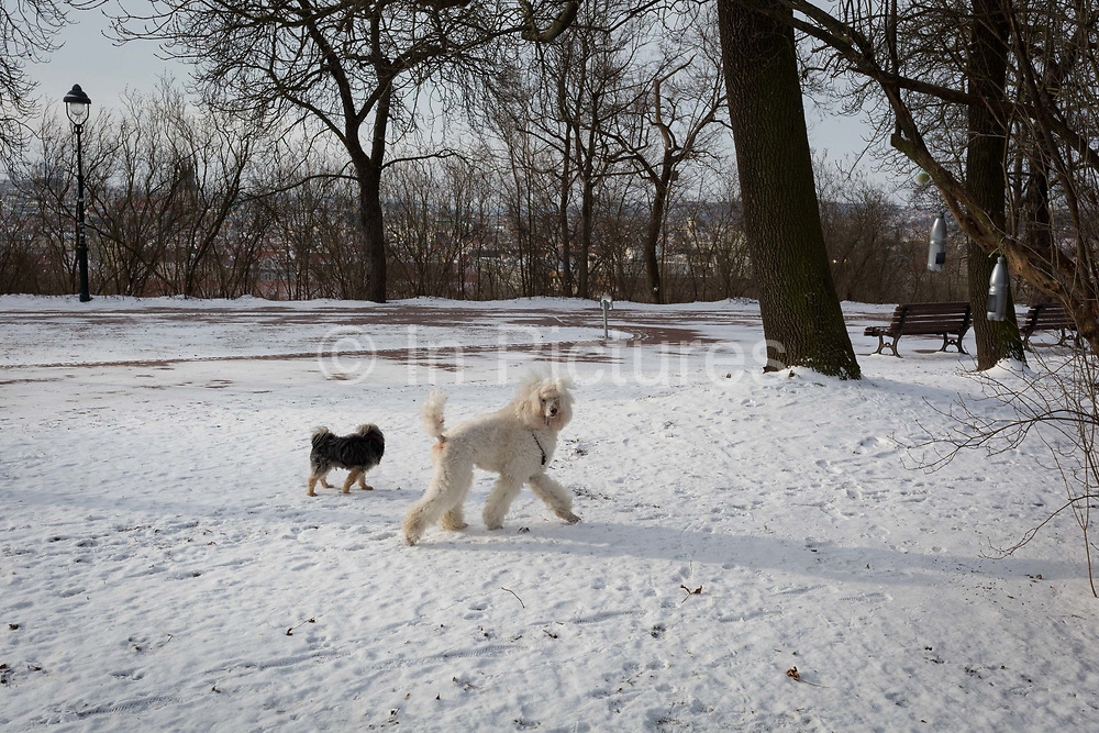 Dogs get exercise in late snow in Letna Park Letenske Sady, on 18th March, 2018, in Prague, the Czech Republic.