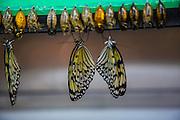 Victoria Butterfly Gardens, Victoria, Vancouver Island, Canada