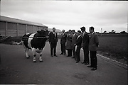 30/06/1965<br /> 06/30/1965<br /> 30 June 1965<br /> Japanese Trade Delegation visit Leinster A.I. Station, Clondalkin, Dublin. Image shows (l-r): Mr. Edward O'Mahon, (Department of Agriculture); Mr. Charles Vaughan, (Secretary, Dublin District Milk Board); Mr. M. Araki (Toshoku Ltd., London); Mr. M. Ishikawa (General Manager Kamaganaken Daiichi Dairy, Japan); Mr. Y. Katsurashima, (Chief of Dairy Farming Section of Morinaga Milk Industry Co. Ltd.); Mr. Roderick Murphy, Trade Advisor, Coras Trachtala and Mr. Richard Richards, Veterinary Director, Leinster A.I. Cattle Breeding Station.