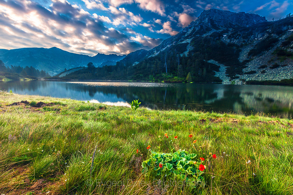 Fresh green grass and bunch of red flowers by the lake