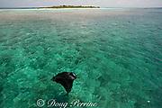manta ray, Manta alfredi (formerly Manta birostris ), feeding on plankton, Kihaadufaru Reef, with Hanifaru Island in background, Hanifaru Lagoon, Baa Atoll, Maldives ( Indian Ocean )