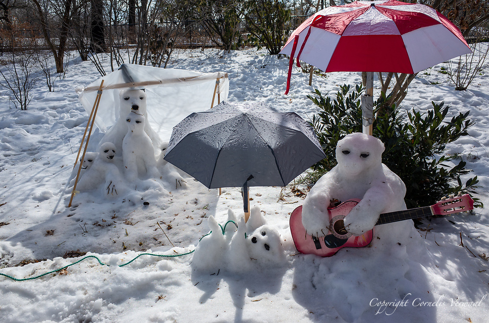 These snowbears are enjoying the warmer weather, unaware that it will cause their impending doom
