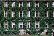 Nassau Hall ivy, Princeton University Campus, Princeton, New Jersey, USA