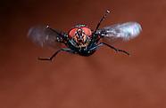 FEATURE: ssssssssss - Houseflies
