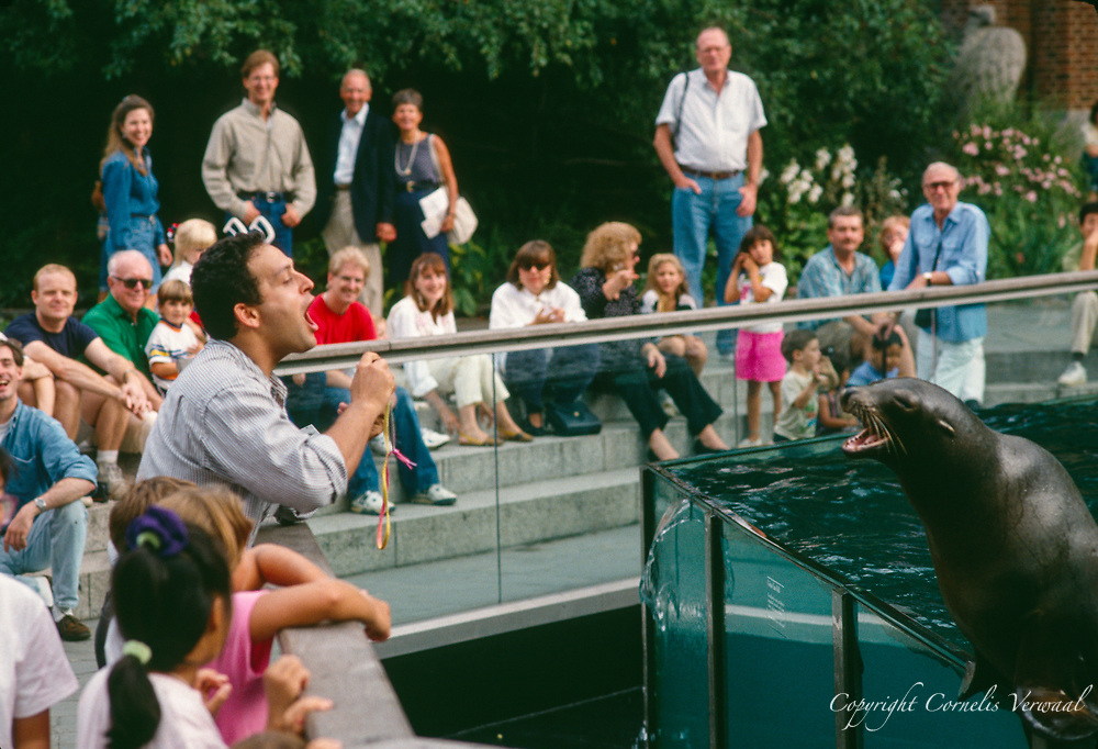 Communications between man and seal at the Central Park zoo, New York City, 1992.