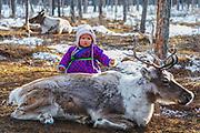 A little Tsaatan girl and a reindeer (Rangifer tarandus), Khovsgol Province, Mongolia