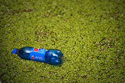 © Licensed to London News Pictures. 05/07/2019. London, UK. A plastic bottle floats on the surface of the Grand Union Canal at Little Venice in central, covered by green duck weed as on July 5, 2019. Warm weather causes an increase of the weed which reduces oxygen levels in the water, threatening fish stocks. Photo credit: Ben Cawthra/LNP