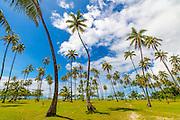 Coconut Grove, Temae, Moorea, French Polynesia