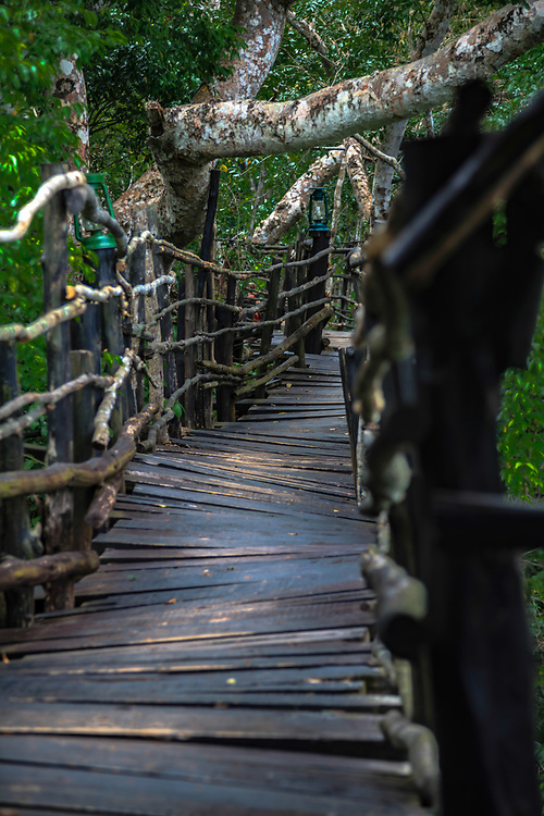 Jungle bridge less traveled Kenya.