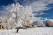 Tree in field covered with snow and ice.
