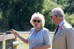 The Duchess of Cornwall and the Prince of Wales greet horses as they visit Dyfed Shire Horse Farm in Eglwyswrw in Pembrokeshire, Wales.