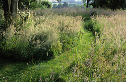 Mown grass path leading through the meadow area at Ketley's