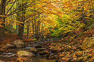 Small river in an autumn forest