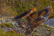 Sandstone outcropping along the Rocky Mountain Front Range near Choteau, Montana, USA