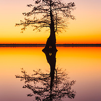 """Tree Of Life"" - Silhouette of a bald cypress in Lake Drummond at evening civil twilight, in the middle of the Great Dismal Swamp, VA. Honorable Mention, Nature, 44th Westchester International. NANPA 2017 Showcase, Top 100."