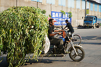 Man transporting a load of some sort of crop on a 3 wheeled motorcycle in Wenzhou, China,