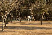 Free roaming horses in the Negev Desert, Israel