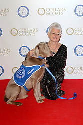 © Licensed to London News Pictures. 07/11/2013.  Jacqueline Wilson at the Battersea Dogs & Cats Home Collars & Coats Gala Ball at Battersea Evolution, London UK. Photo credit: by Richard Goldschmidt/LNP
