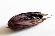 Mazorca de maíz morado / Ear of purple corn