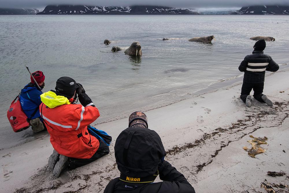 Polar travellers photographing walrus, Odobenus rosmarus, Svalbard, Norway, Arctic ecotourism